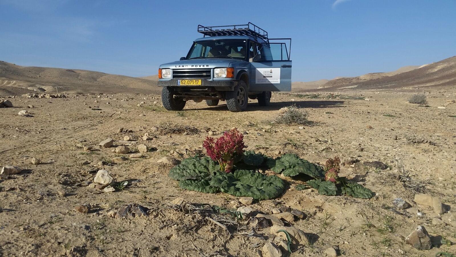 טיול ג׳יפים ריבס המדבר הר הנגב הגבוה