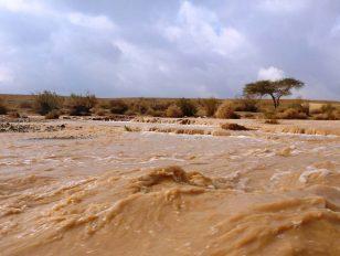 שטפונות במדבר